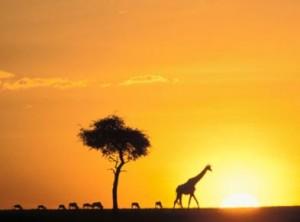 Assurance voyage Afrique