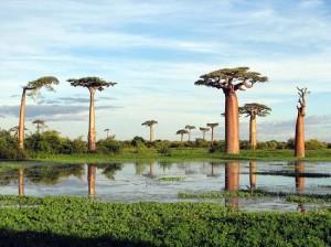 Assurance voyage Madagascar