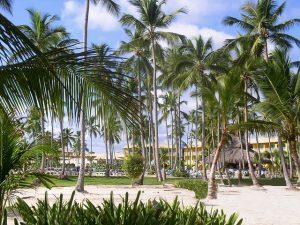 République Dominicaine : en maillot de bain sexy sous les palmiers.
