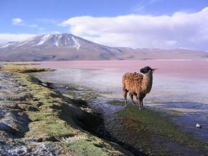 Assurance voyage Bolivie