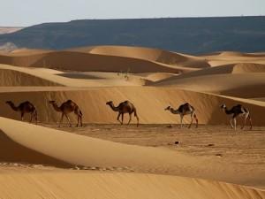 Assurance voyage Mauritanie