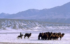 Assurance voyage Mongolie