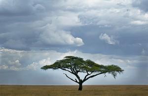 Assurance voyage Tanzanie